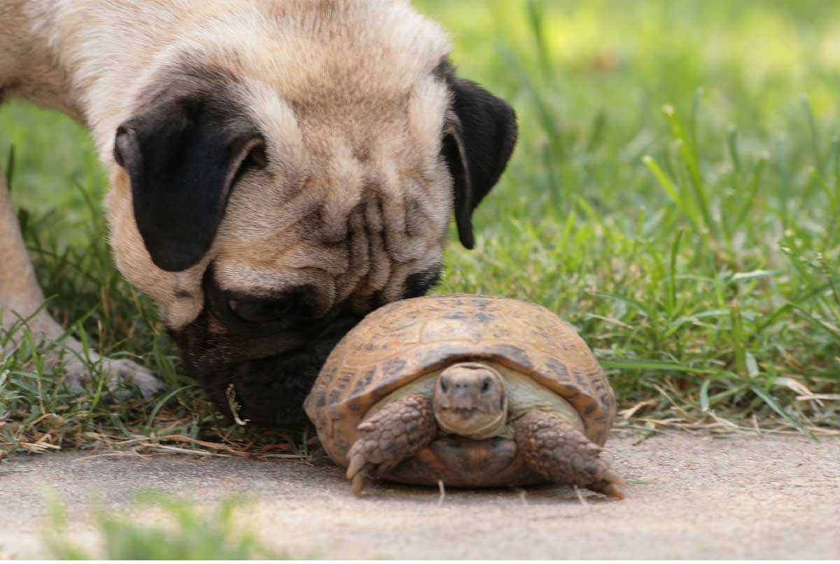 photo dog with turtle