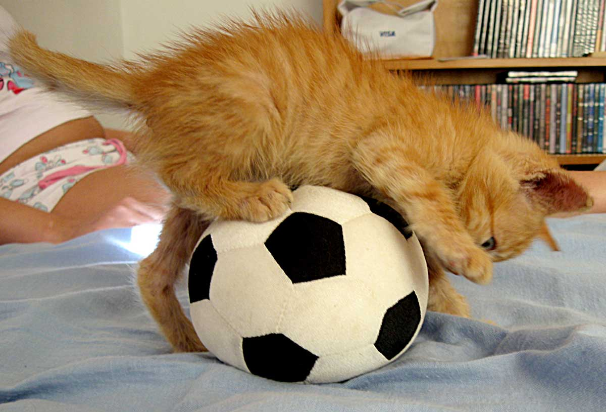 photo kitty with ball